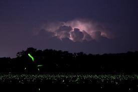 lightning-1