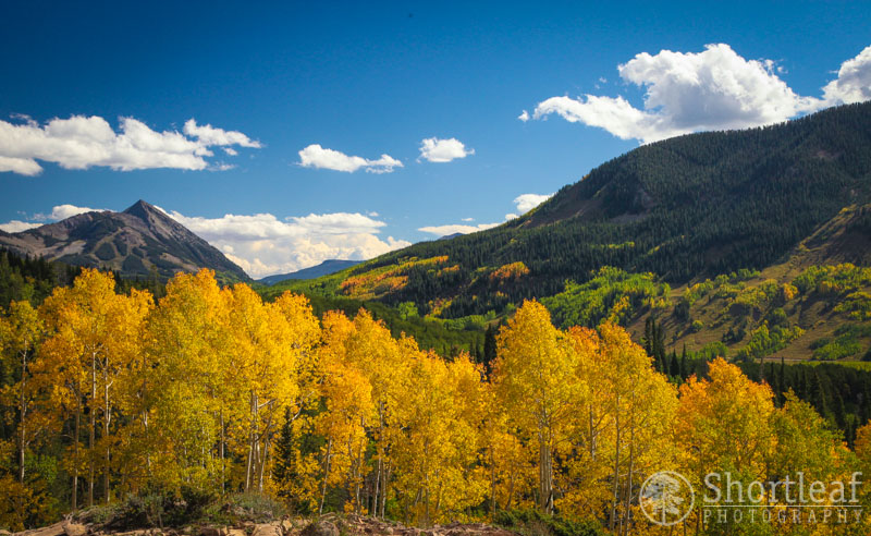 Here we have some loud aspen trees proclaiming the onset of fall.