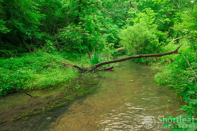 walter woods-5
