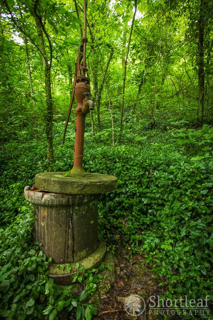 walter woods-6