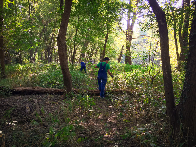 Working on a section of the trail a few weeks ago where a tree had fallen and weeds were encroaching over the path.