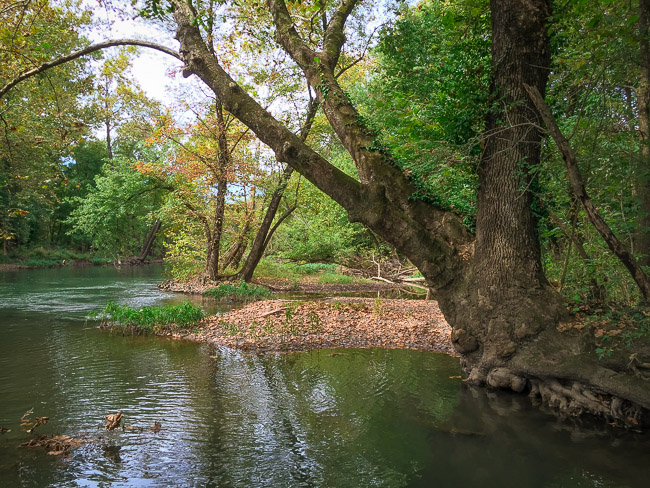 Here is a beautiful spot along the main channel of Spring River. Though this isn't technically on the designated trail, it's just a short detour down a side path and it's part of the park.