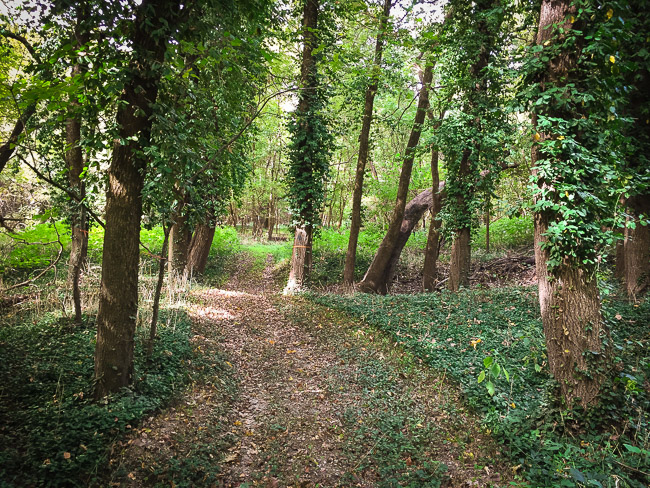 This trail winds it's way through the woods, up and over small mounds and various changes in the surface.
